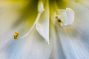 Entspannter als Yoga: Makrofotografie
