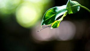 Bokeh Libelle