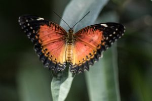 Makrofotografie: Schmetterlinge