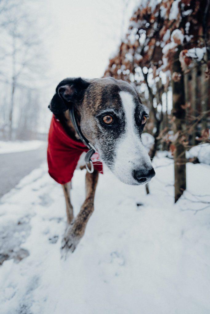 Hund mit Tamron Weitwinkel aufgenommen